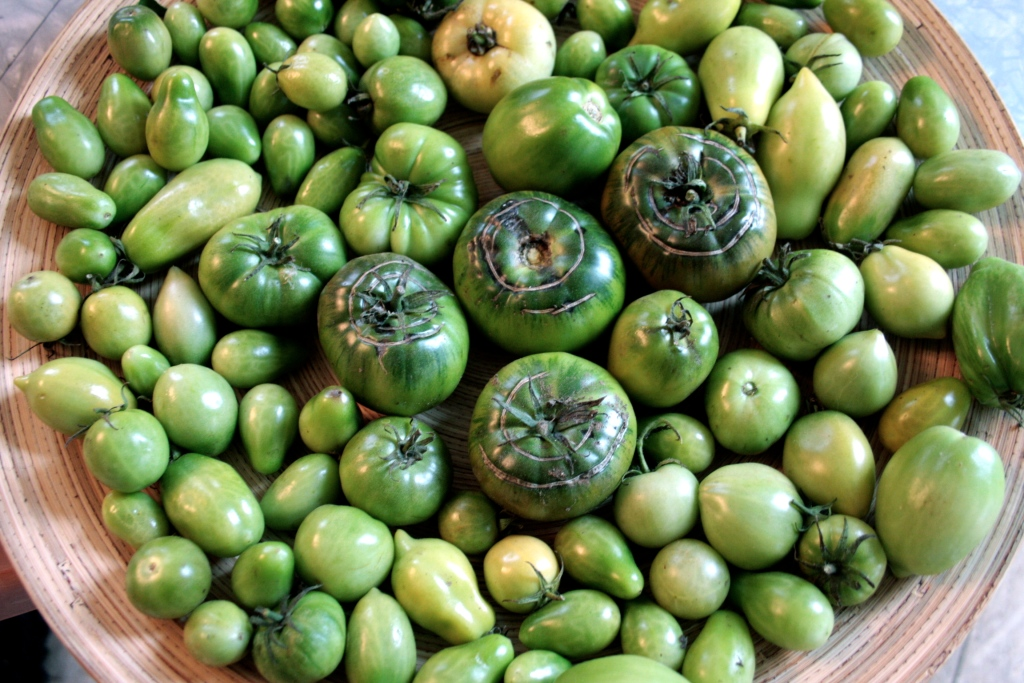 more green tomatoes